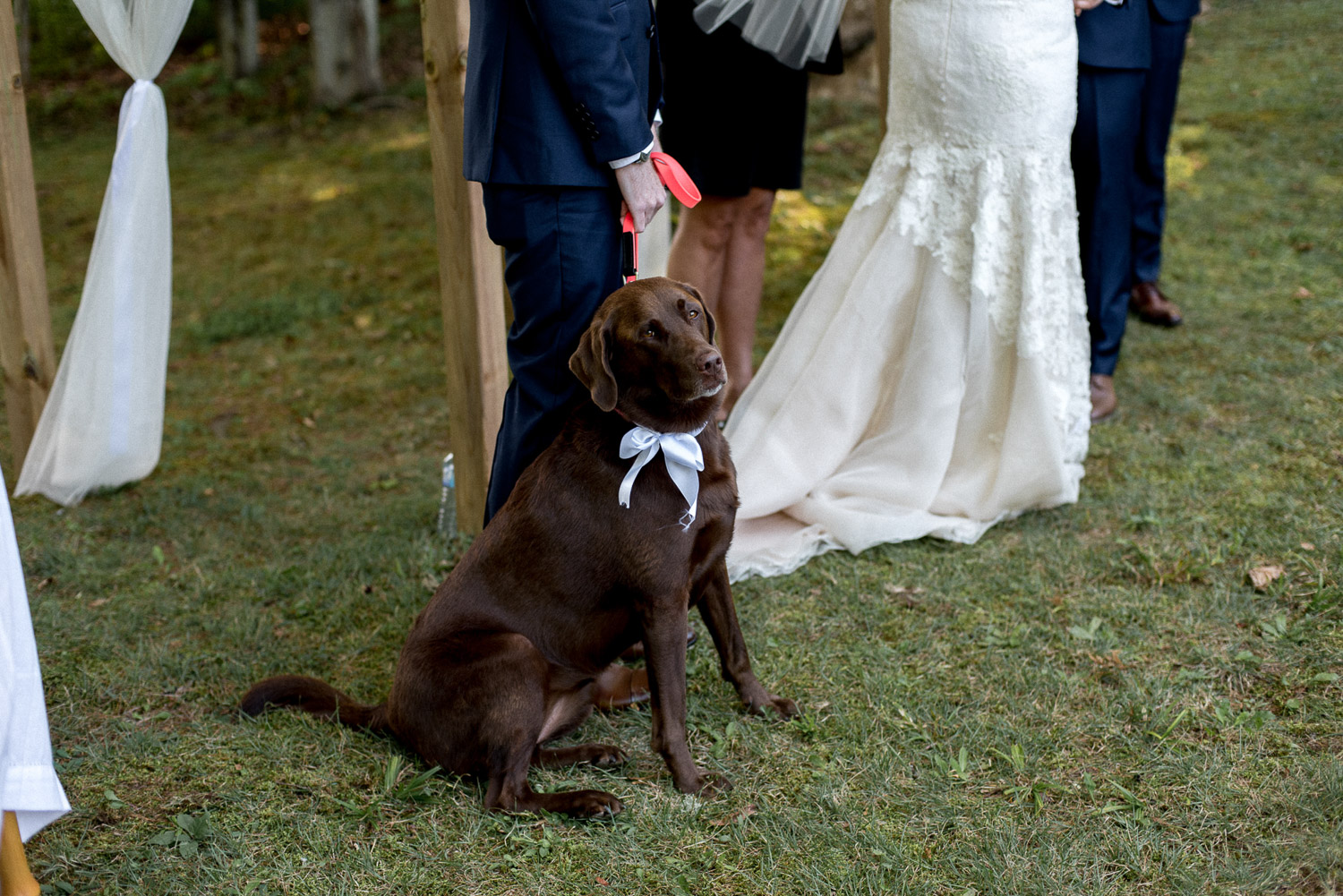 Labrador retriever at ontario cottage wedding